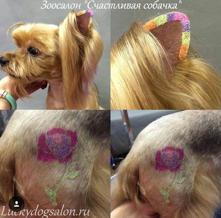 Dog Grooming Shears Petsmart