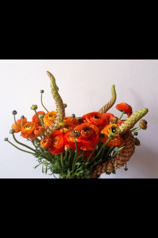 Mood Orange flowers ranunculus