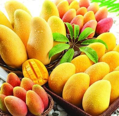 MANGOES ~ Fiji's wild organic mango season has started and the locals are learning that this delicious tropical fruit is nature's fountain of youth and one of the best super foods to have in your diet...
