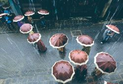 Singing in the rain: Duoi Mua (In the Rain) by Mai Thanh Chuong won the gold medal for the best colour photo at the National Art Photography Exhibition