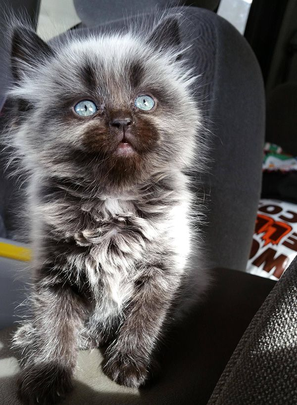 Beautiful kitten. The type of cat that will make you a cat person.