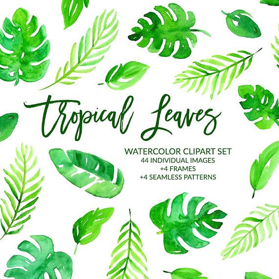 Watercolor Clipart Tropical Leaves Clipart Tropical Clipart