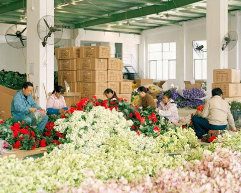 Taylor GlennProduce Plastic, Shoots Photography, Advertis Photographers, Taylors Glenn, Factories Produce, Flower Factories, Chine Factories, Plastic Flower, Artificial Flower