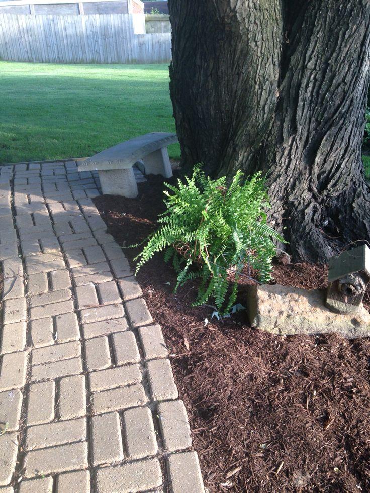 Love ferns in the shade garden