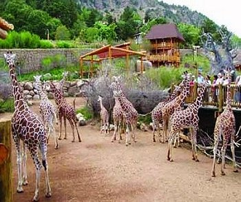 Book a Vail or Breckenridge vacation rental for a summer trip to beat the heat...and stop at the Cheyenne Mountain Zoo in Colorado Springs to check out all the cool animals!