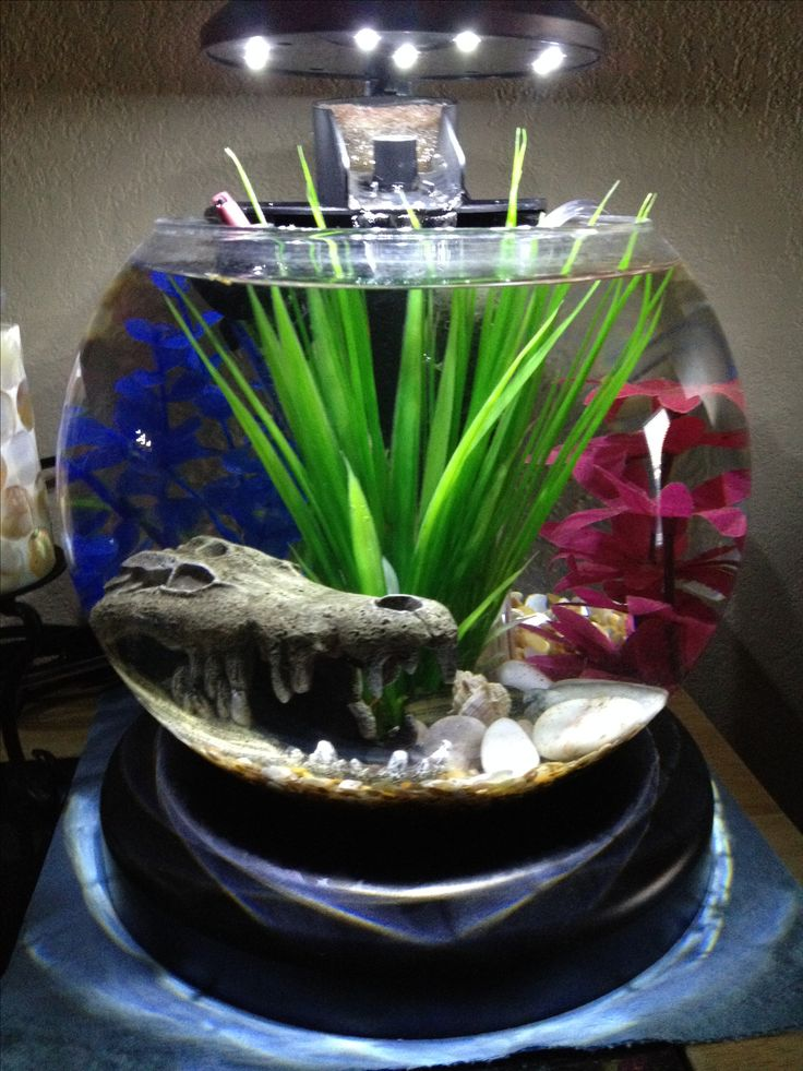 Betta fish bowl with waterfall filter and heater. #betta #fishbowl
