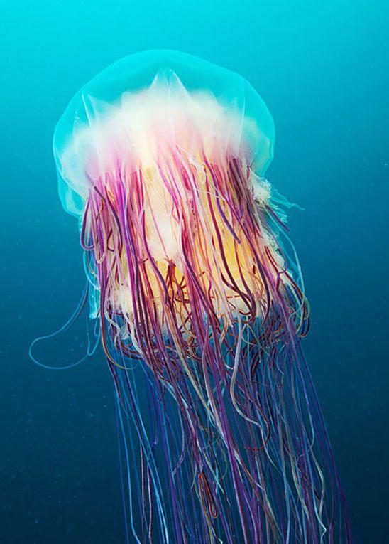Amazing underwater photography - Alexander Semenov