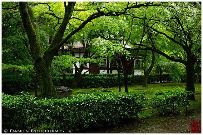 New green at Shinyodo Temple