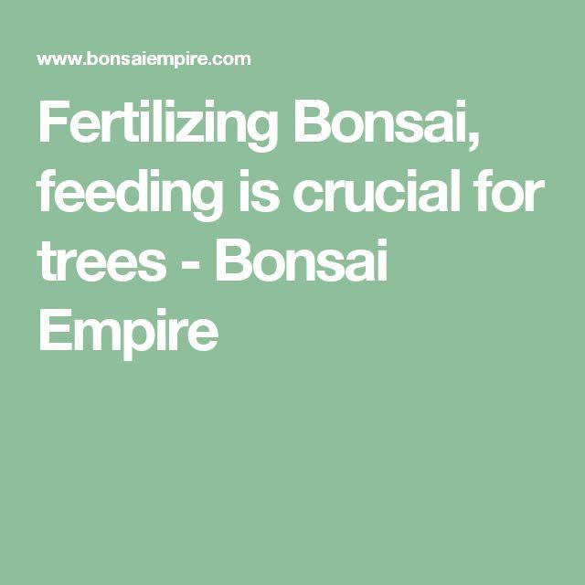 Fertilizing Bonsai, feeding is crucial for trees - Bonsai Empire
