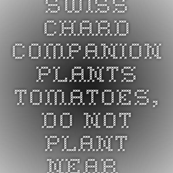 Swiss Chard Companion Plants Tomatoes Do Not Plant Near 640 x 480