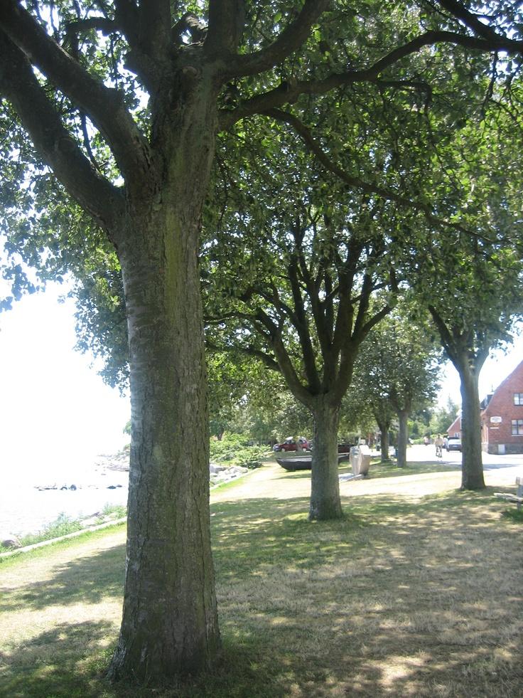 Träden nedanför vårt hus