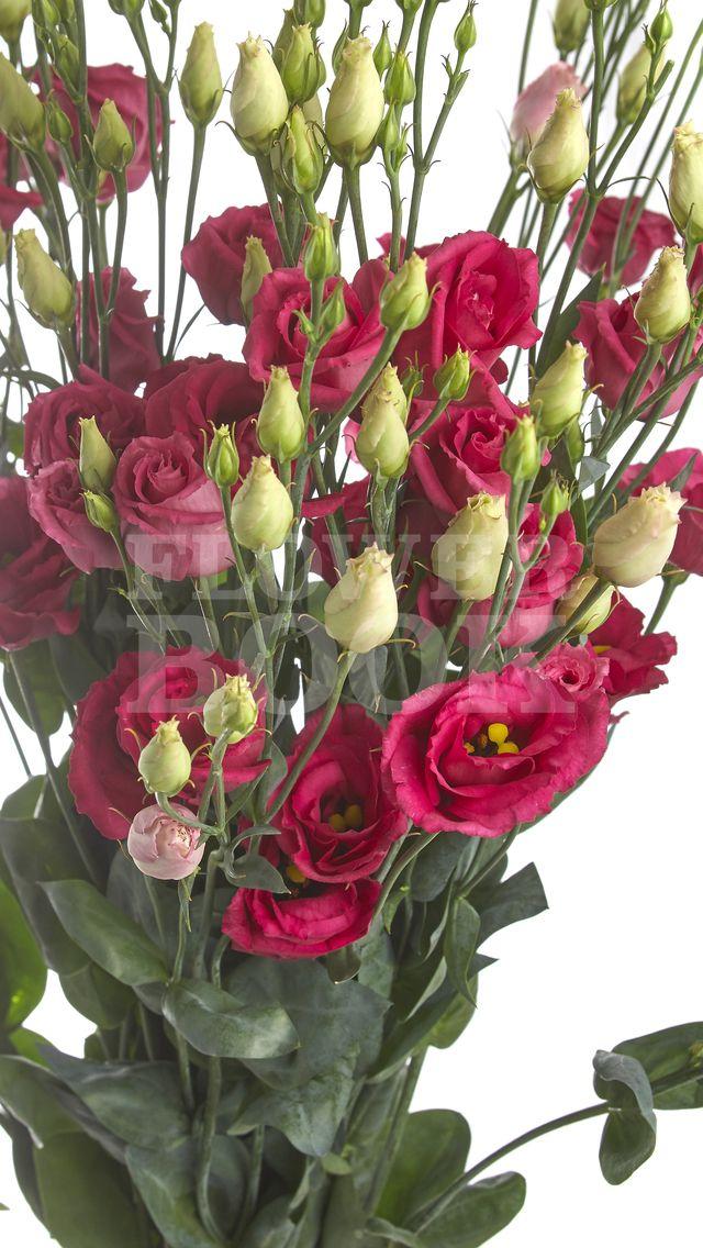 Lisianthus D Rosita Red Cvetochnye Kompozicii Cvety Rozy