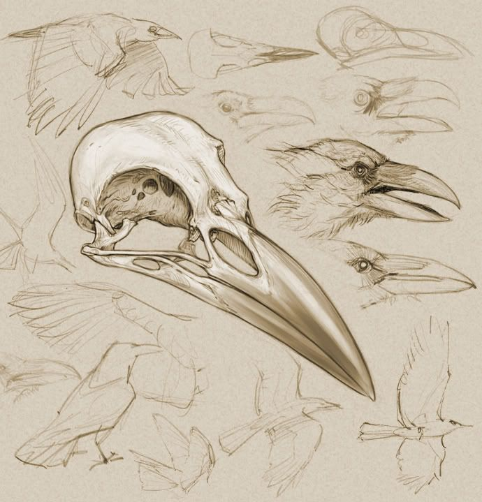 Crow Skull - by Bill Melvin (digital drawing)