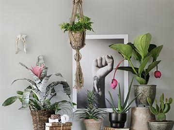 En mjuk och lyxigt bohemisk stil kan kan med fördel blandas med kraftfulla, tunga och grågröna bladväxter.