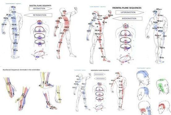 ● Les fascias, clé de notre santé - Bien être, santé, relaxation, massage, stress, shiatsu, Qi Qong; phytothérapie, remède de grand-mère