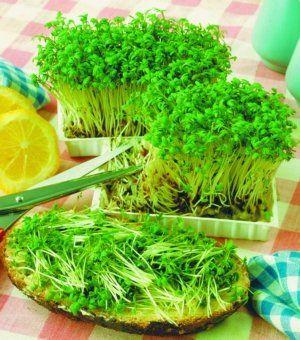 Выращиваем листья салата в доме
