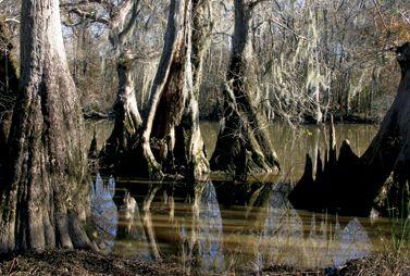Swamps are beautiful: Orleans, Louisiana, Beautiful