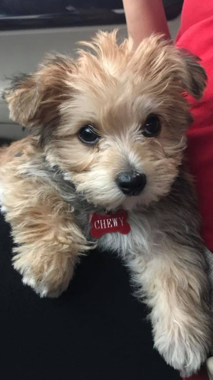 best manus best friend images on pinterest animals puppies
