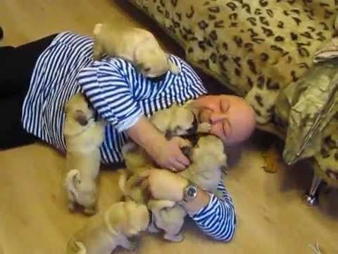 Is there anything better than being on the receiving end of a giddy puppy pile-on? Maybe winning the lottery--but if I won the lottery the first thing I would probably buy is a giant pile of pugs. So no, no there is probably nothing better than this.