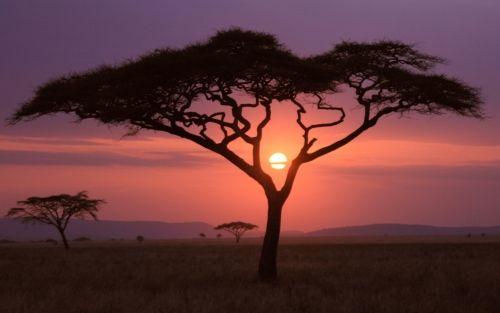 Afrikai naplemente, Afrika,naplemente,szahara,sivatag