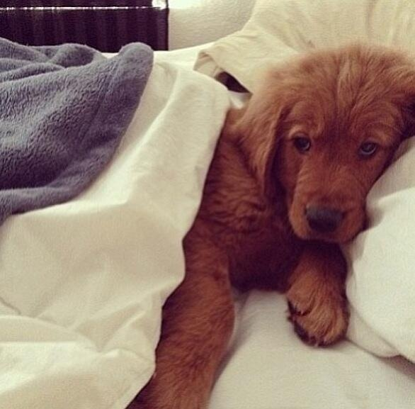 All tucked in