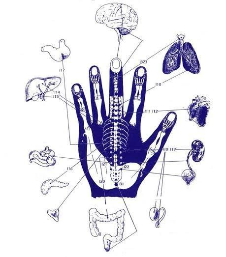 A kéz mikrokozmosza teljes egészében visszatükröződése az egész test…