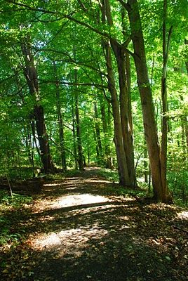 The Sacred Grove in Palmyra, NY. LDS church history site. On my wish list!