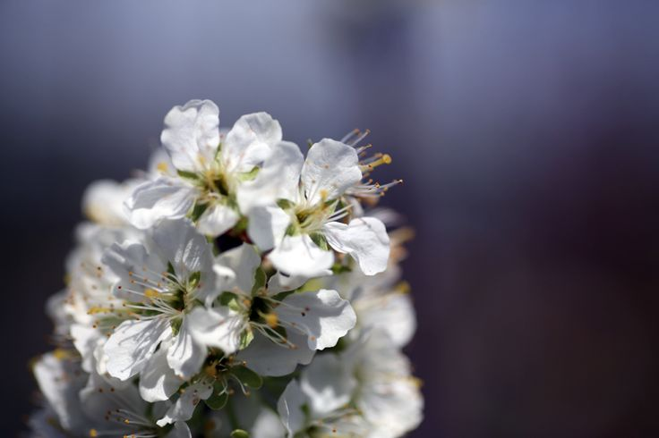 We stock a really good range of fruit trees, and just love blossom time.