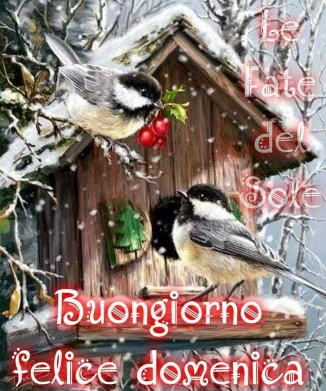 Buongiorno Felice Domenica Invernale Buona Domenica Domenica E