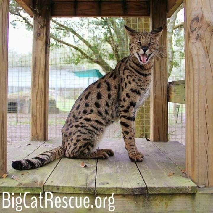 Pin On Big Cat Rescue Tampa Fl