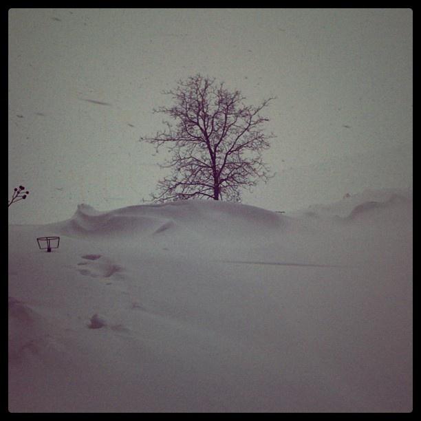 [quassù] deserto di neve, dune comprese - @antogasp- #webstagram