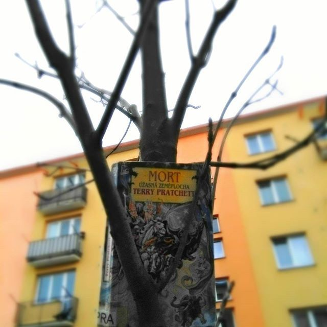 Když knihy rostou na stromech  http:/worldof-fiction.blogspot.cz #fictionworld #terrypratchett #mort #book #read #reading #fantasy #fiction #tree #panelak #whitesky #window #sternberk