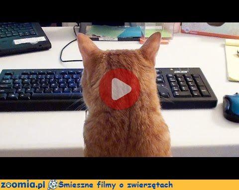 Biurowe koty Śmieszne Filmy Psy http://Zoomia.pl