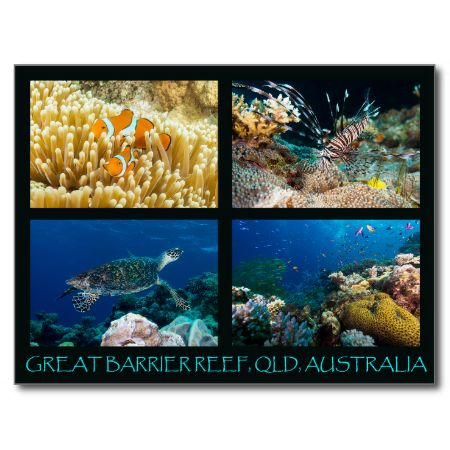 A beautiful postcard featuring some of the abundant and colorful marine life to be found on Australia's Great Barrier Reef. #fish #coral #tropicalfish #reef #scuba #animals #marine #postcard #diving #australia