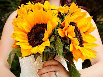 Bouquets de Girasoles -- Fotografía: Jenny J