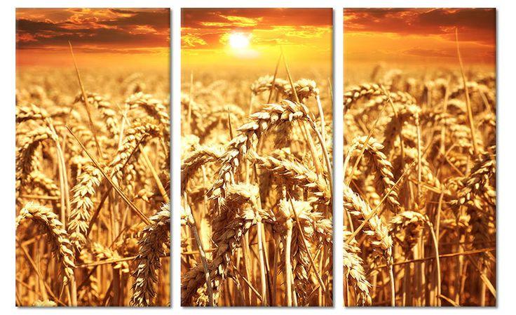 Foto schilderij tarweveld op canvas (drieluik)