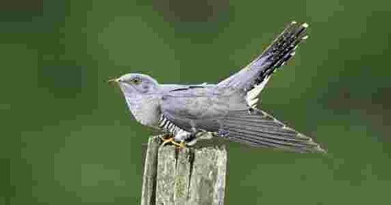 شاهد الطائر المخادع اللئيم Animals Bird Blog Posts