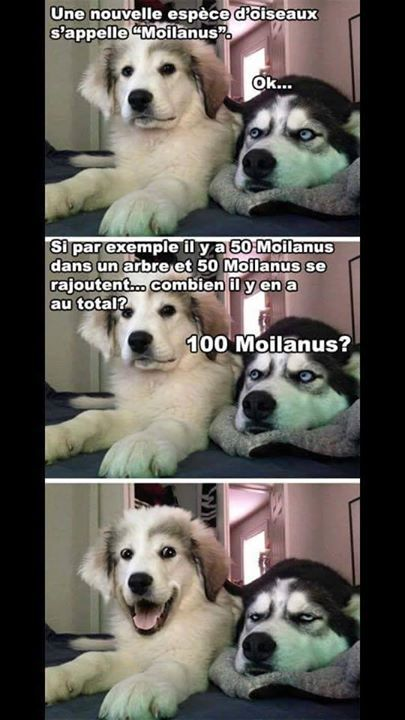#drole#chien#humour