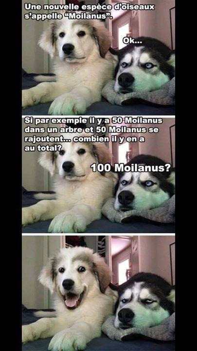 #drole#chien#humour