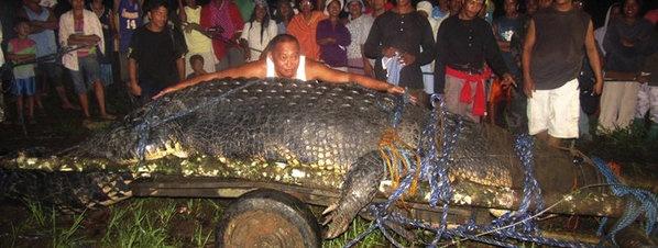 Muere el cocodrilo más grande del mundo en su cautiverio en Filipinas. El último dragón