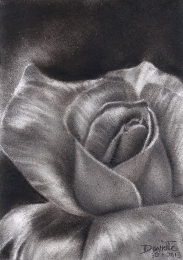 charcoal flower drawings - Google Search