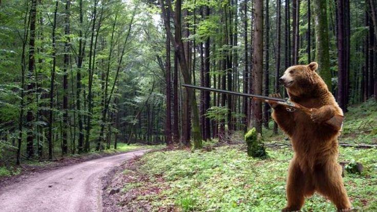 Fegyveres medve garázdálkodik Szibériában | NLCafé
