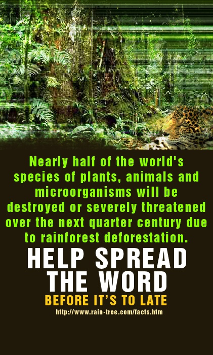 the destruction of rainforests essay The rain forest destruction must be prohibited  rain forest has important role of human life  the middle part of your essay looks original to me because it.