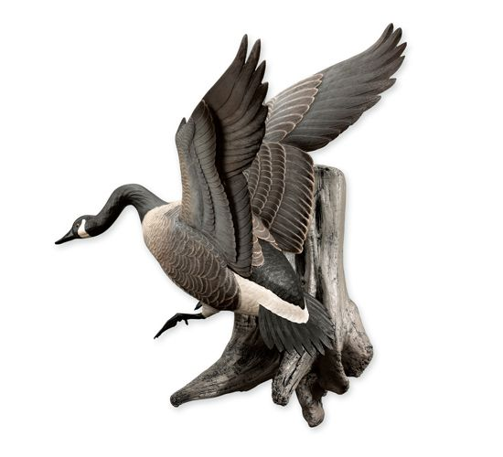 Canadian Goose Mounts Flying Canada Goose Wall Mount