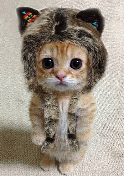 I'm walking out of the common room holding my cat. I start laughing and bump into you, my kitten falls and holds onto your pants. -Ronna (open rp)