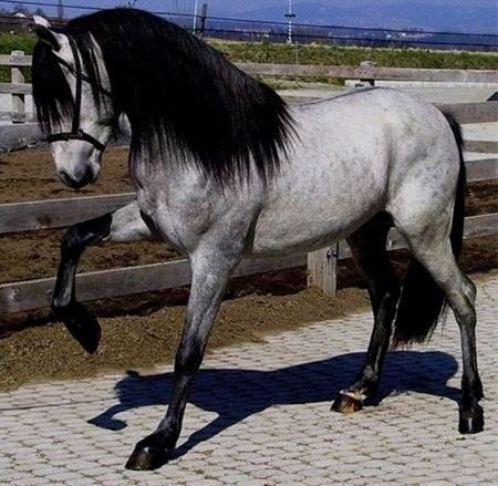 DIS HORSE IS AMAZIN!!