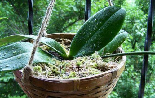 Nem virágzik az orchideád? Próbáld ki ezt az egyszerű trükköt! Nekem bejött! - Ketkes.com