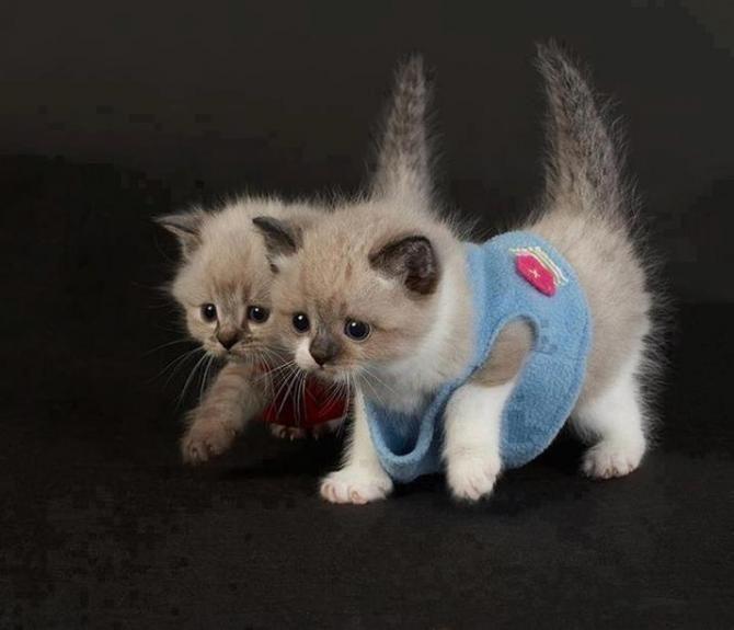 - Małe kotki. | MaleZOO.eu