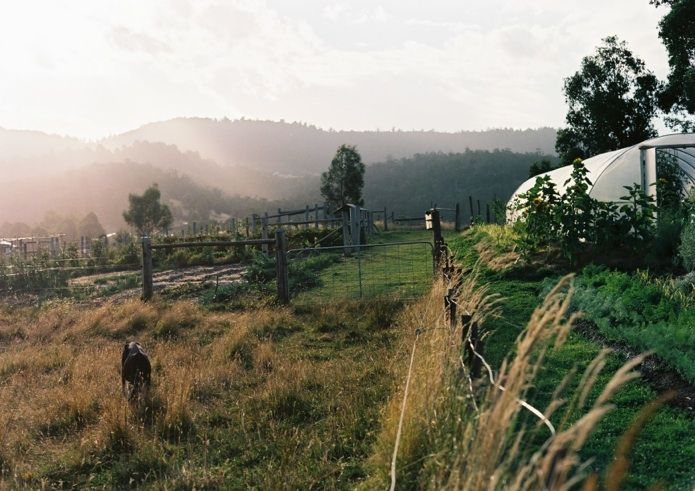 The Agrarian Kitchen Paddock to plate Cooking Classes. They do kiddie classes too