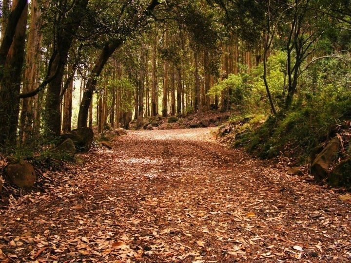 My home <3   Newlands Forest